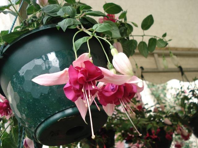 Apremont sur Allier , fête des plantes 511_1140