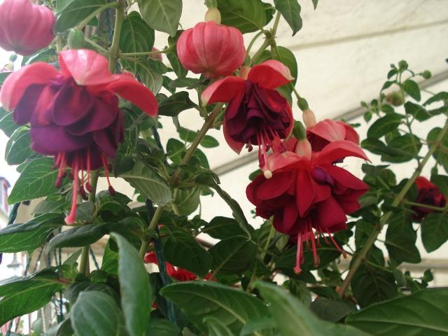 Apremont sur Allier , fête des plantes 511_1141
