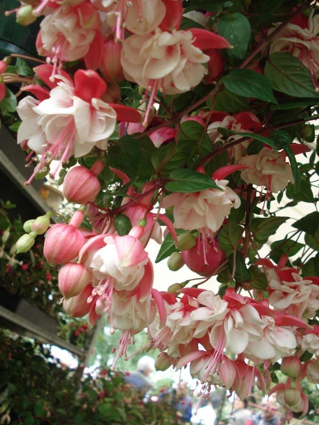 Apremont sur Allier , fête des plantes 511_1149