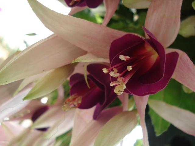 Apremont sur Allier , fête des plantes 511_1153