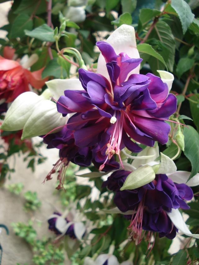 Apremont sur Allier , fête des plantes 511_1154