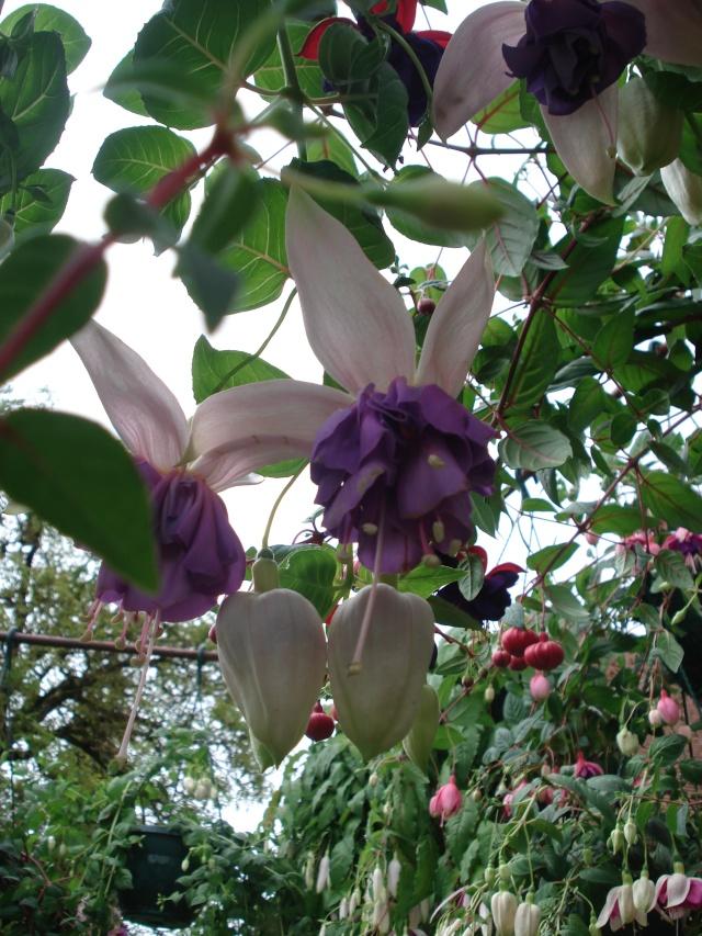 Apremont sur Allier , fête des plantes 511_1155