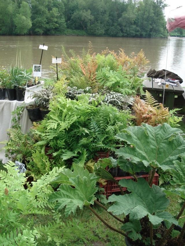 Apremont sur Allier , fête des plantes 511_1160