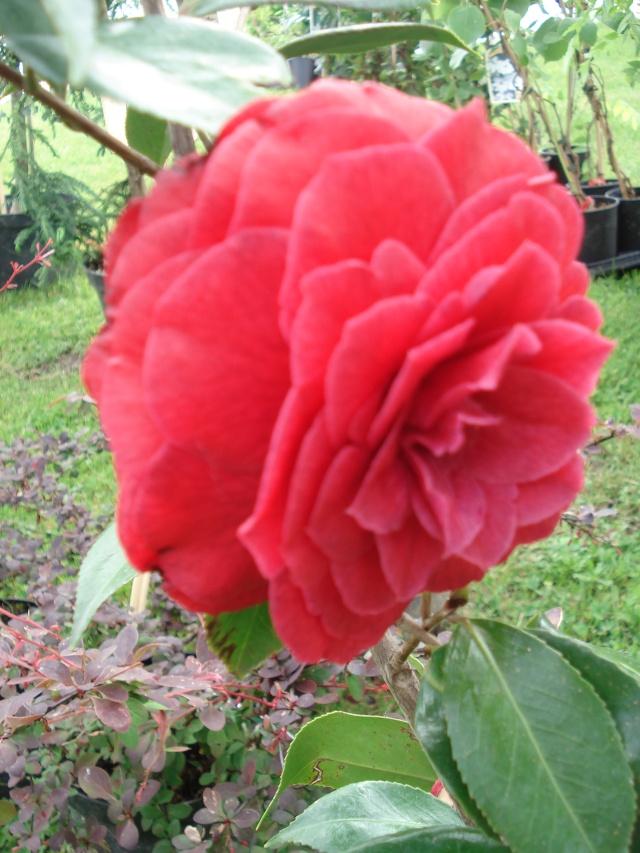 Apremont sur Allier , fête des plantes 511_1162