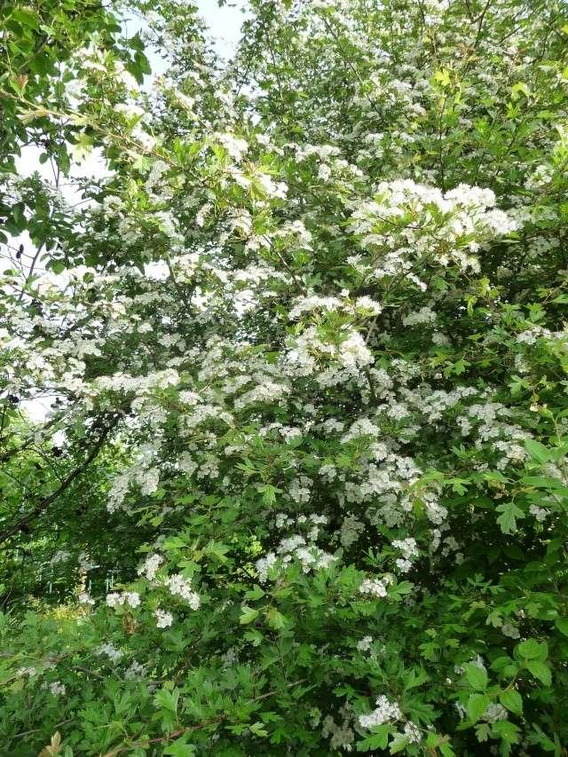 vlà le printemps chez Michelle - Page 3 511_1182