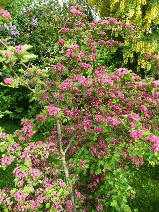 vlà le printemps chez Michelle - Page 3 511_1183