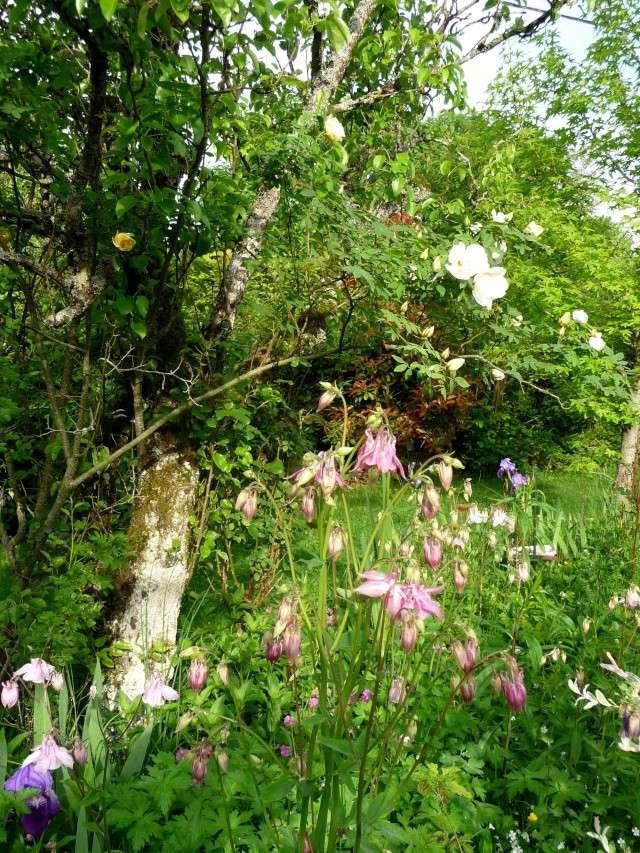 vlà le printemps chez Michelle - Page 3 511_1188