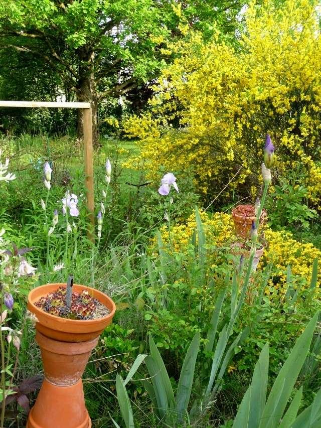 vlà le printemps chez Michelle - Page 3 511_1189