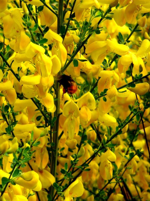 vlà le printemps chez Michelle - Page 3 511_1191