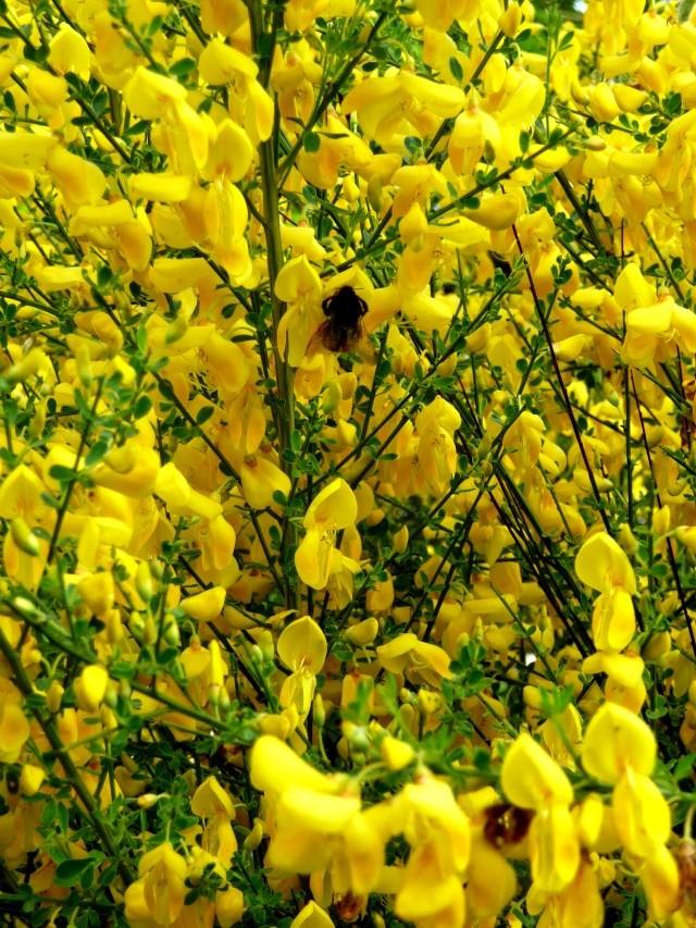 vlà le printemps chez Michelle - Page 3 511_1192