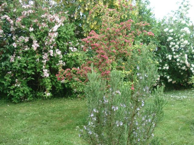 vlà le printemps chez Michelle - Page 3 511_1238