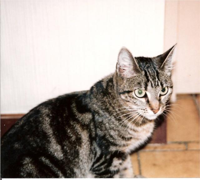 Yeux de chats - Page 2 Animau18
