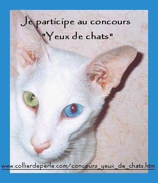 cpncours photos yeux de chats Concou10
