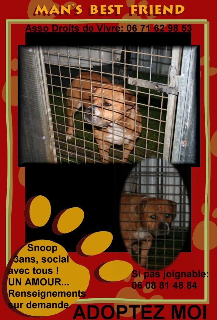 SNOOP adorable chien super social - Page 5 Snoop10