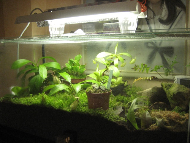 Fiche d'élevage de l'heterometrus longimanus Terras10