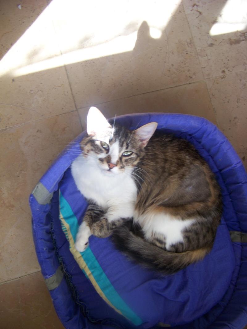 Yeux de chats Arrive25