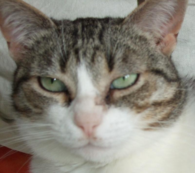 Yeux de chats Coqreg10