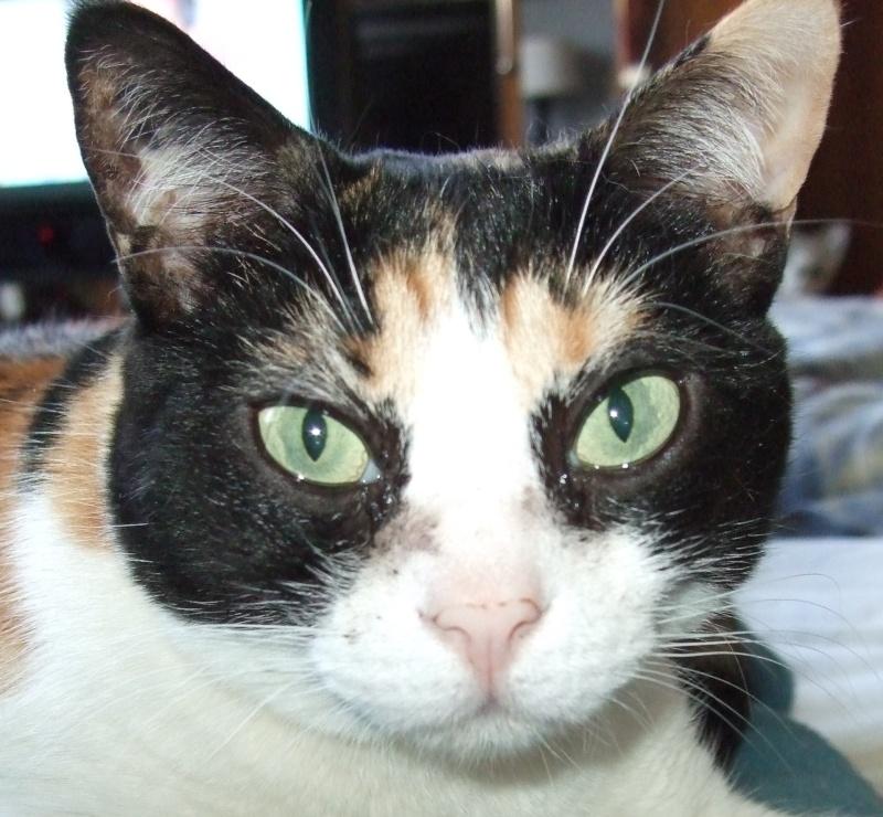 Yeux de chats Peluch10
