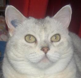 Yeux de chats Prince11