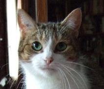 Yeux de chats Ritour10