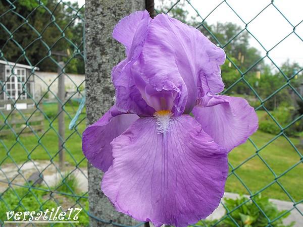 P'tites fleurs Dscf2111