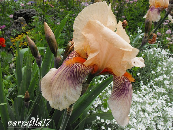 P'tites fleurs Dscf2113