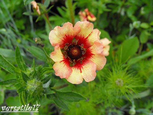 P'tites fleurs Dscf2114