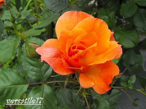 P'tites fleurs Dscf2115