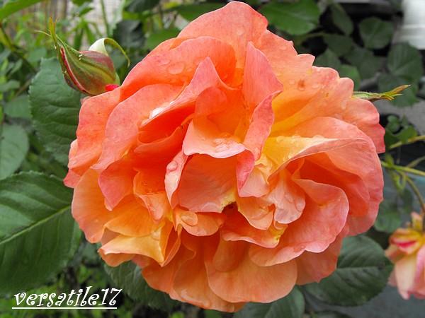 P'tites fleurs Dscf2211