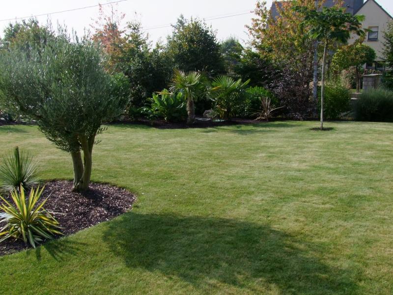 Le jardin de Stéro Dscf3323