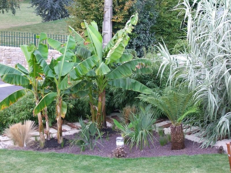 Le jardin de Stéro Dscf3331