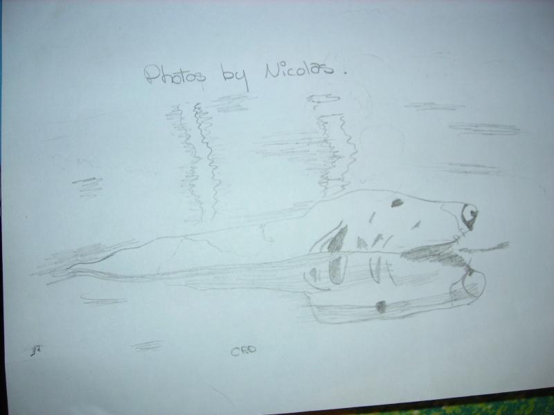 Les dessins...De Poussin ! Dessin14