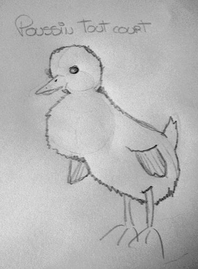 Les dessins...De Poussin ! Poussi10