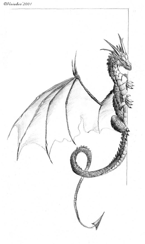 illustration Draco10