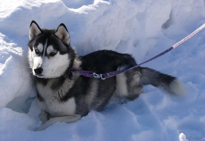 Nos loups grandissent, postez nous vos photos Baltik10
