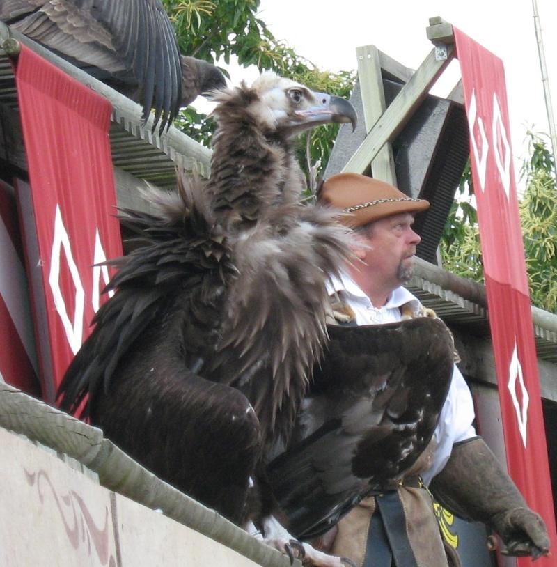 Hors sujet -----------> Le puy du fou en Vendée (85) Oiseau11