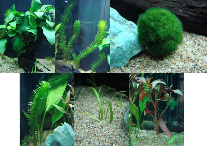 Mon aquarium à moi !!! Aqua0010