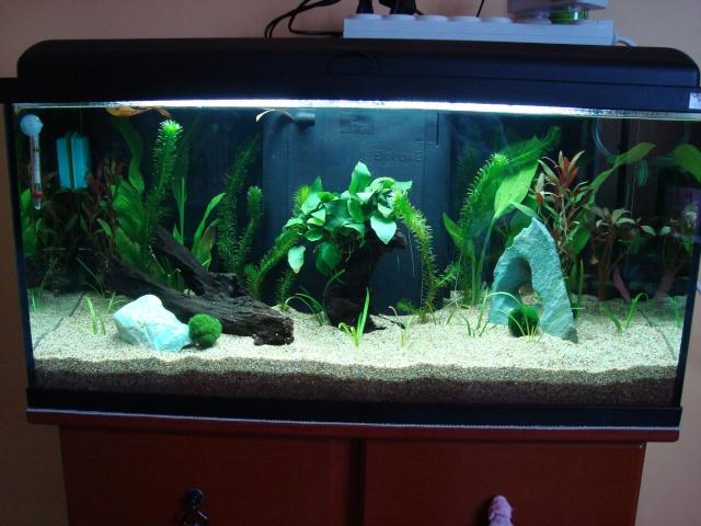 Mon aquarium à moi !!! Dsc01910