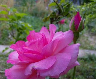 Ο κήπος της θείας Χαρίκλειας Hpim8918