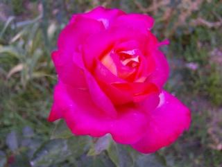 Ο κήπος της θείας Χαρίκλειας Hpim8919
