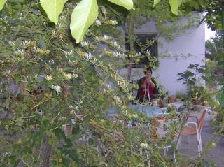 Ο κήπος της θείας Χαρίκλειας Hpim8921