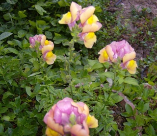 Ο κήπος της θείας Χαρίκλειας Hpim8924