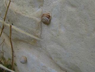 Σαλιγκάρια και Αράχνες Hpim9023