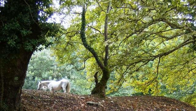 Αναζητώντας το άσπρο άλογο Iiiyii11