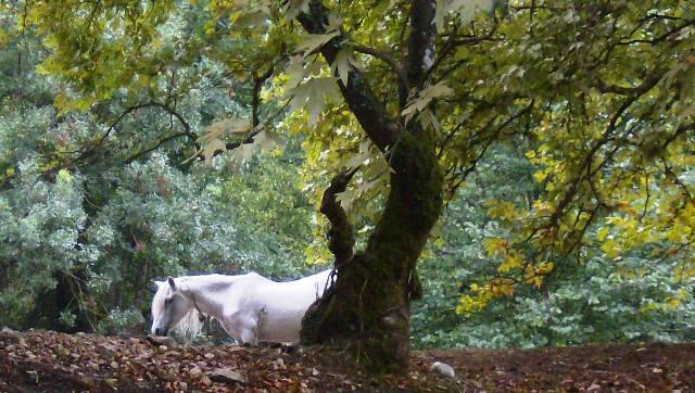 Αναζητώντας το άσπρο άλογο Iiiyii13