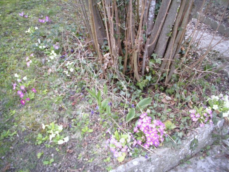 le jardin de lilas Dcfc0087
