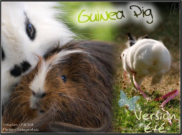 Guinea-pig & Cie