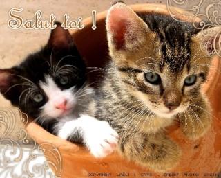 Hello tout le monde Salut_12