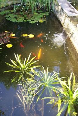 plantes aquatiques 25_07_10