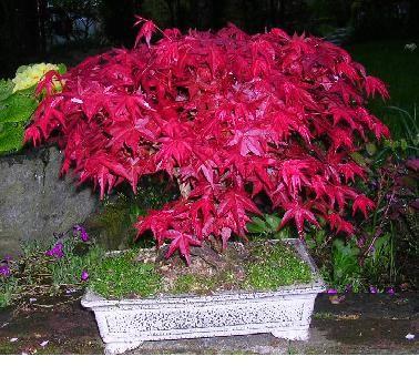 Un joli bonsaï pour Papy Idem_e10